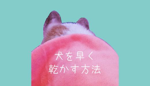 犬をなるべく早く乾かす方法【ダブルコート】